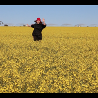 GM Canola Trial Run (2014)
